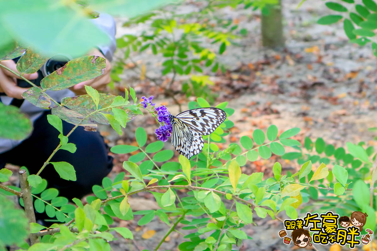 高雄金獅湖蝴蝶園-9