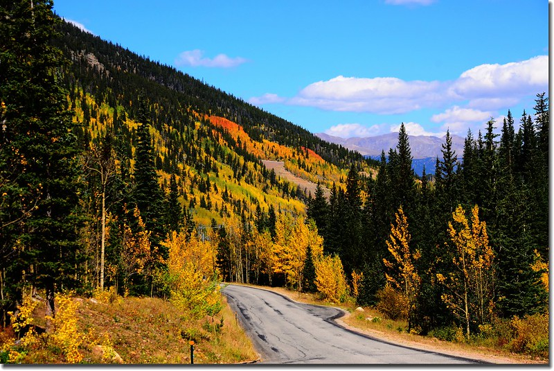 Fall colors, Guanella Pass, Colorado (21)