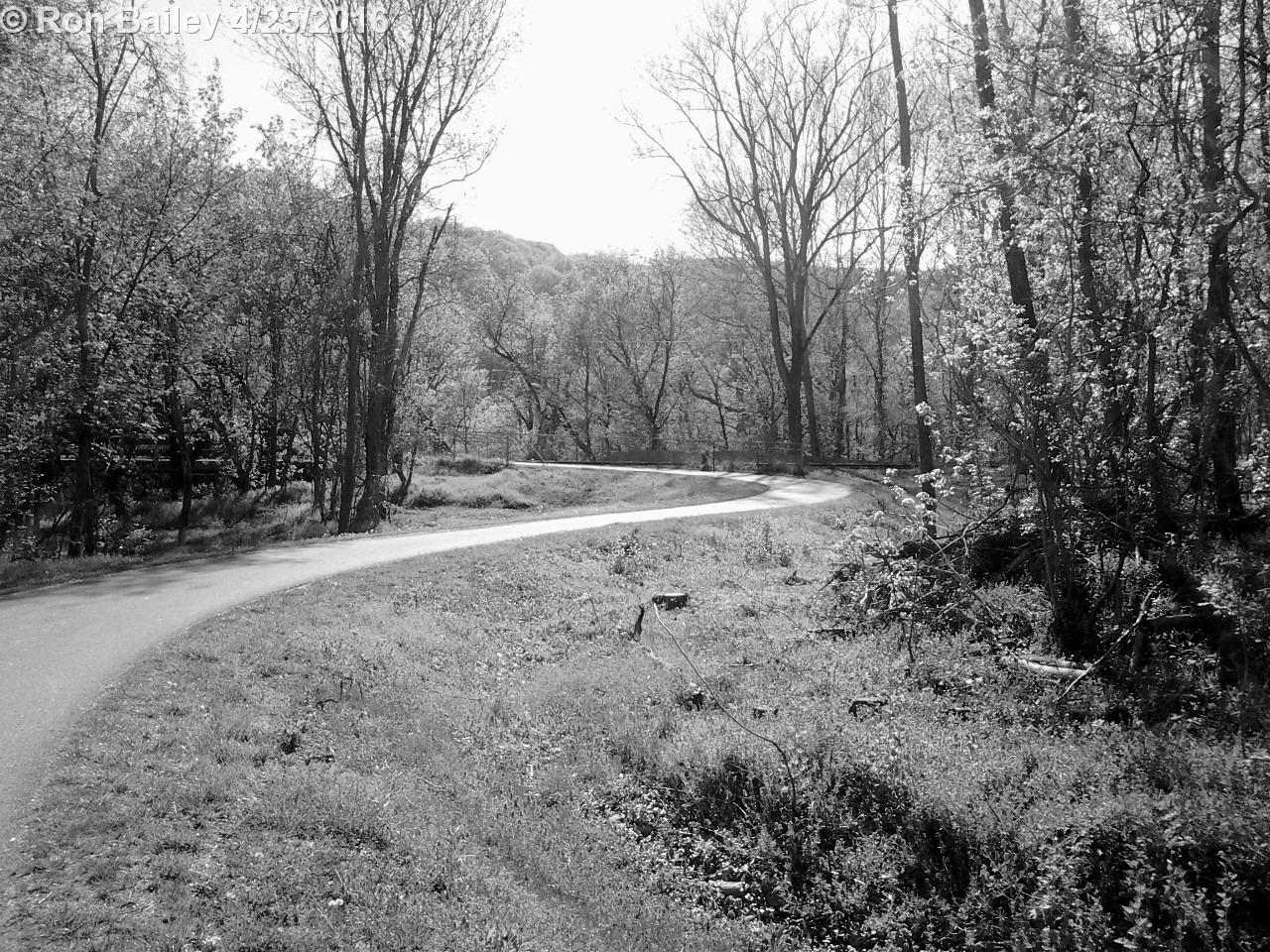 Bikepath Walk 4-24-16 34 BW