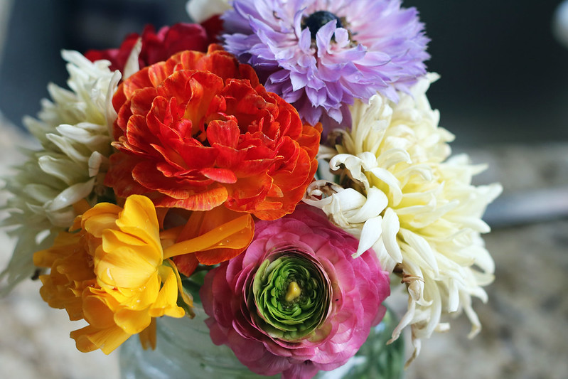 Cut Flower Anemones and Ranunculus