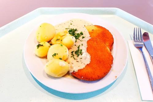 Cauliflower cheese medaillons with potatoes & herb sauce / Blumenkohl-Käse-Medaillions mit Salzkartoffeln & Kräutersauce