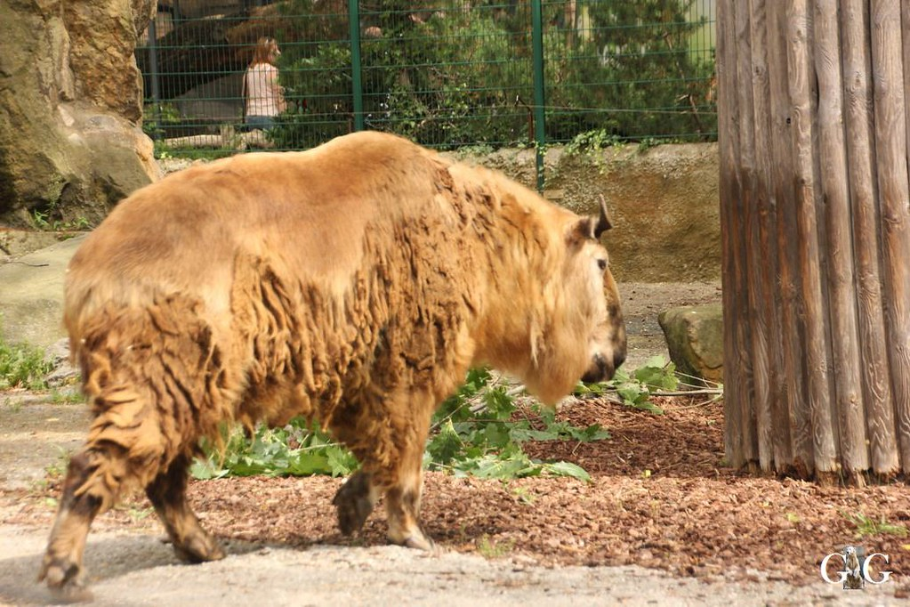 Besuch Zoo Berlin 13.08.17137