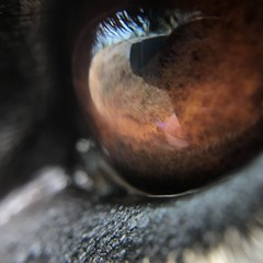 My best friend's eye