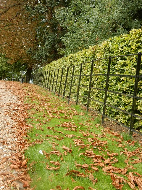 Well kept hedge and fence , Weedon