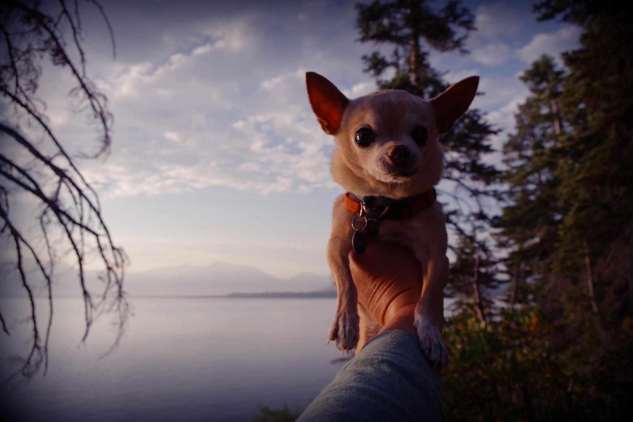 lake Tahoe floyd