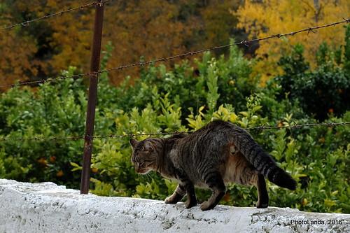 El Gato del Valle de la Alegría