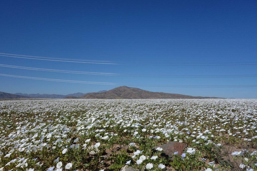Region III - Desert Fleuri 1