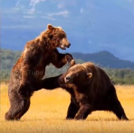 bear nut punch
