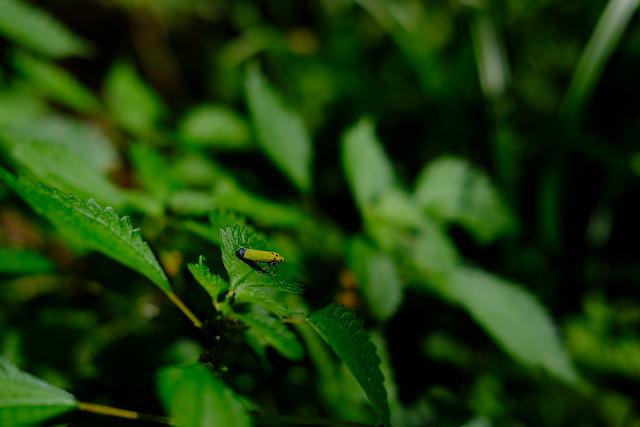 X-T20 昆虫
