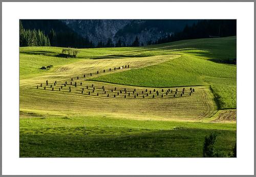 Heuernte (hay harvest)