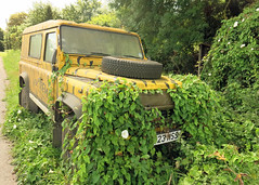 Extreme Vegetation
