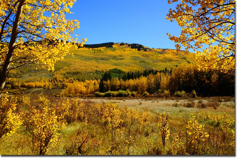 Fall colors, Kenosha Pass  (8)