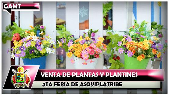 4ta-feria-de-asoviplatribe-venta-de-plantas-y-plantines