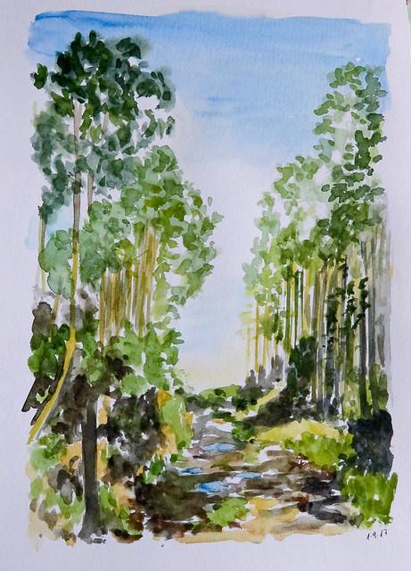 Camino de la eucaliptera. Arroes (Asturias)