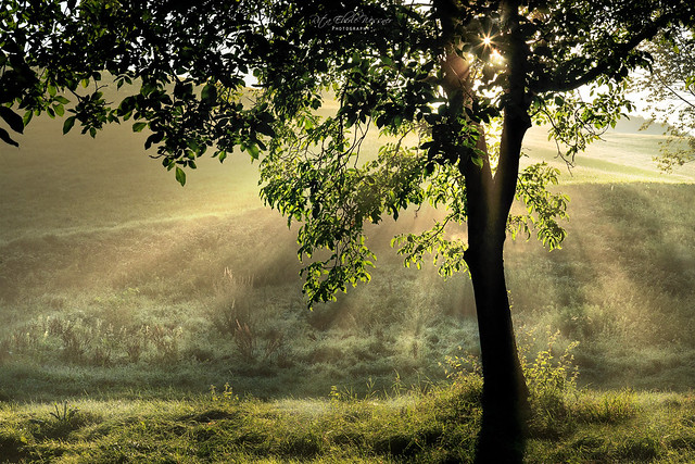 Autumn sunlight - explore