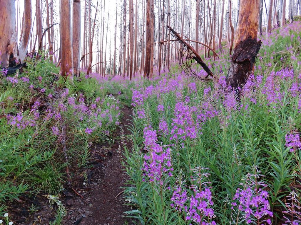 Vista Ridge Trail