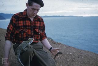 Tuatara, Gecko, Dick Barwick, an antarctic zoologist from university Wellington, Little Brother, May 1958. Eroding gravel of petrel colony on north west corner of island
