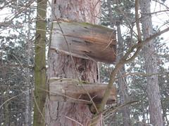 IMG_8499 Schon seit Jahrzehnten ausgebleichte Holzschilder, 24.1.2010