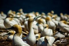 Amimals & Birds