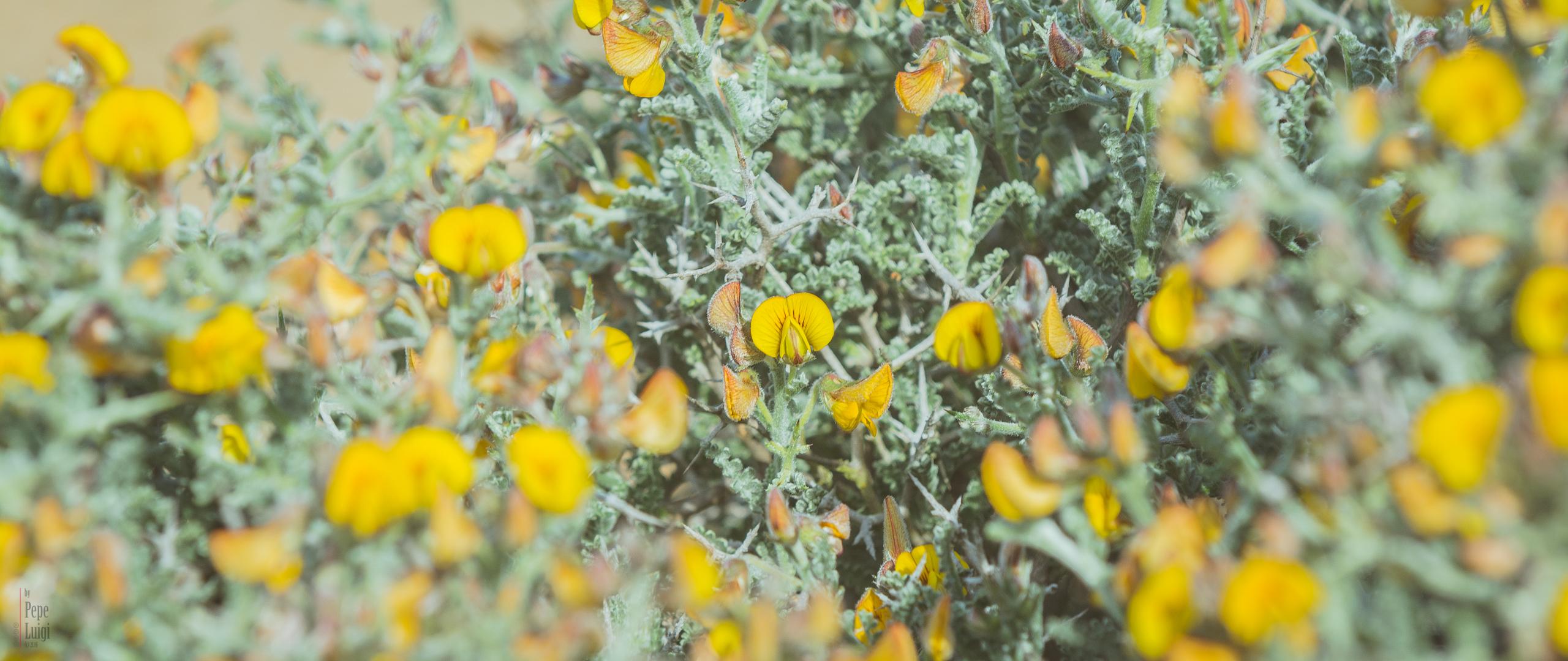 Desierto Florido en Atacama