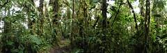 Rio Ñambi Reserve