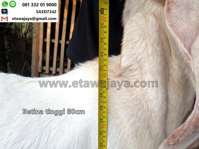 betina-80cm-23-20170918