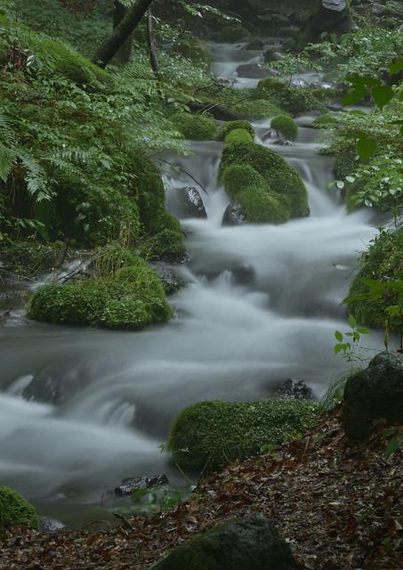 clear stream, Nikon D750, AF-S Zoom-Nikkor 24-70mm f/2.8G ED