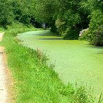 Overgrown canal