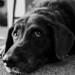 my_dog_05