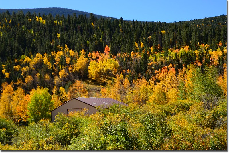 Fall colors, Kenosha Pass  (2)