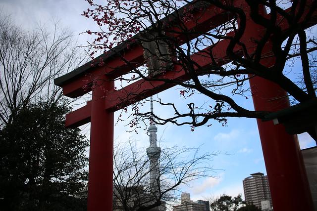20170114-亀戸天神社_0006.jpg