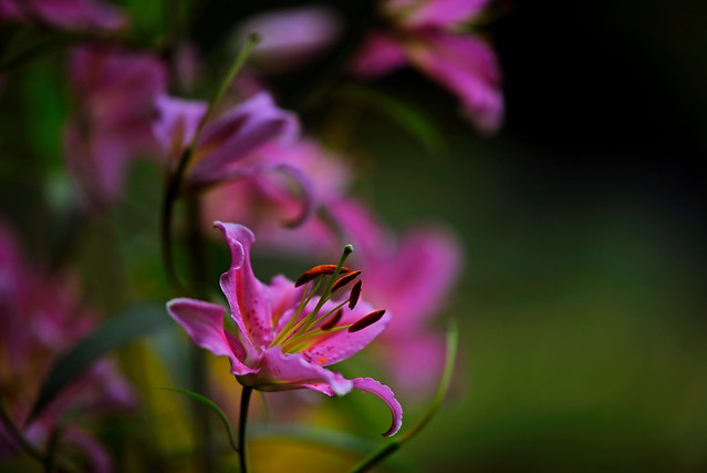 flower 1274