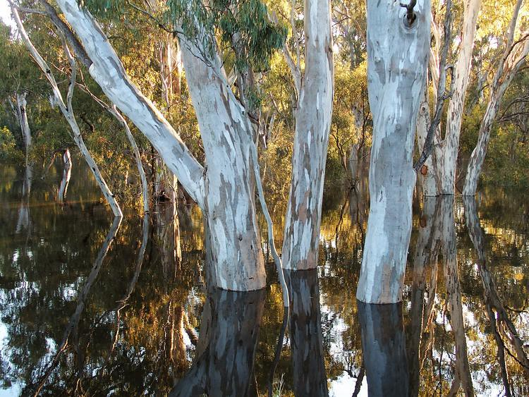 Reflections in Edward River Floodwaters, Deniliquin, New South Wales