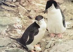 Antarktica - South Orkneys