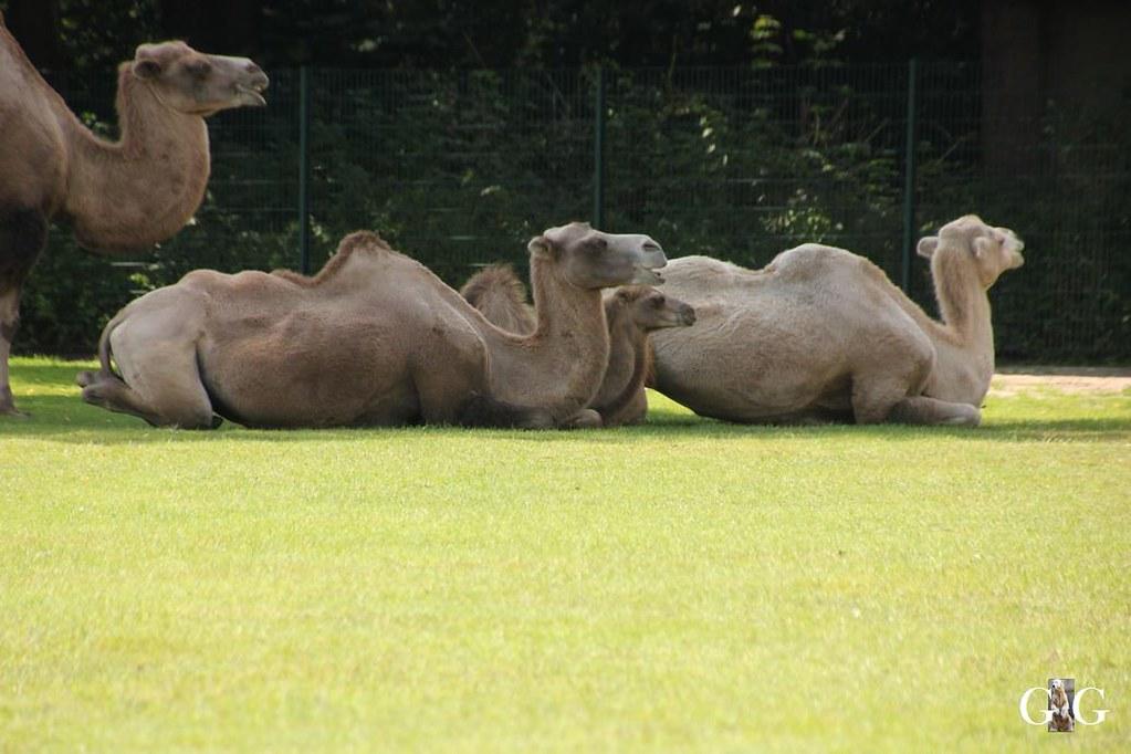 Besuch Tierpark Friedrichsfelde 20.08.1764