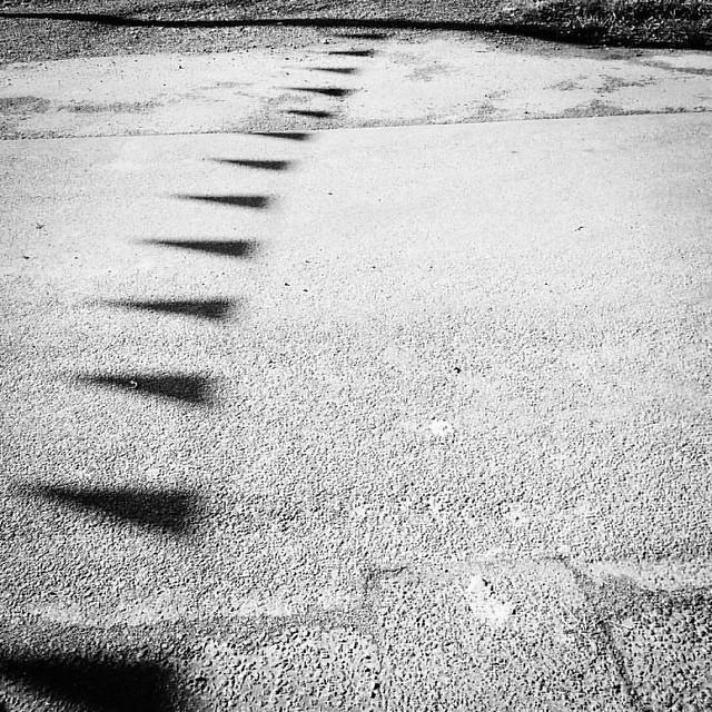Shadow bunting #oftheday #dogwalkingduty #woodpeckernotshown