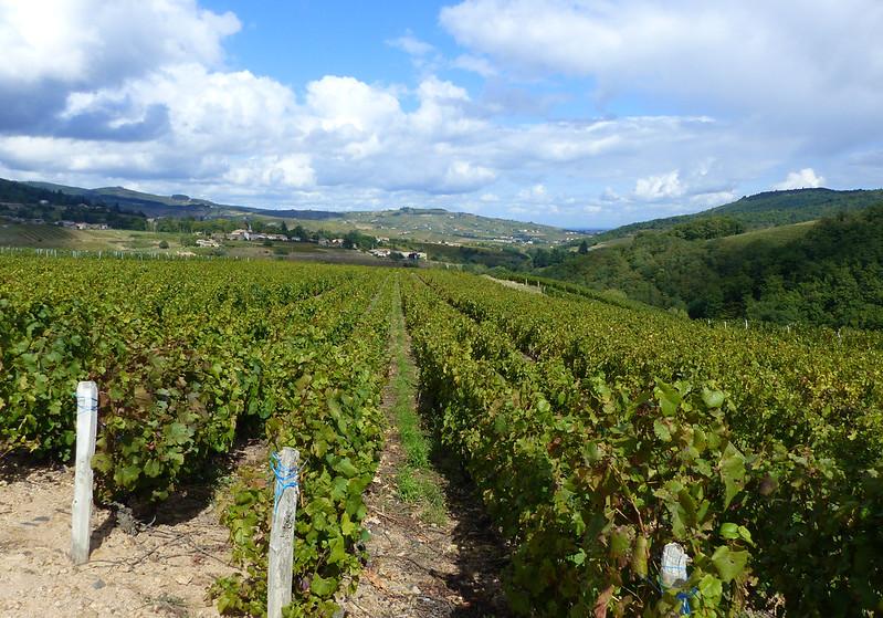 A travers le Bourbonnais, le Beaujolais et la Bourgogne... 37165777562_f2ce374bb9_c