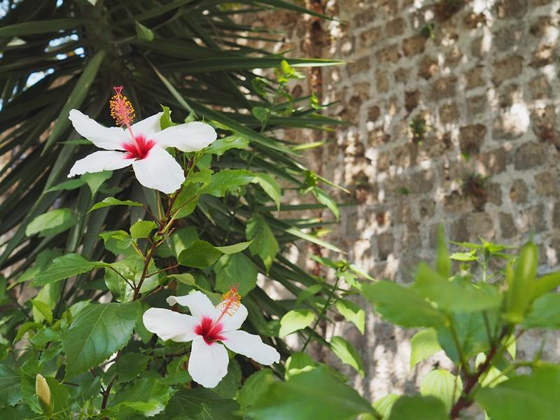 kukkia-vanhakaupunki-rodos