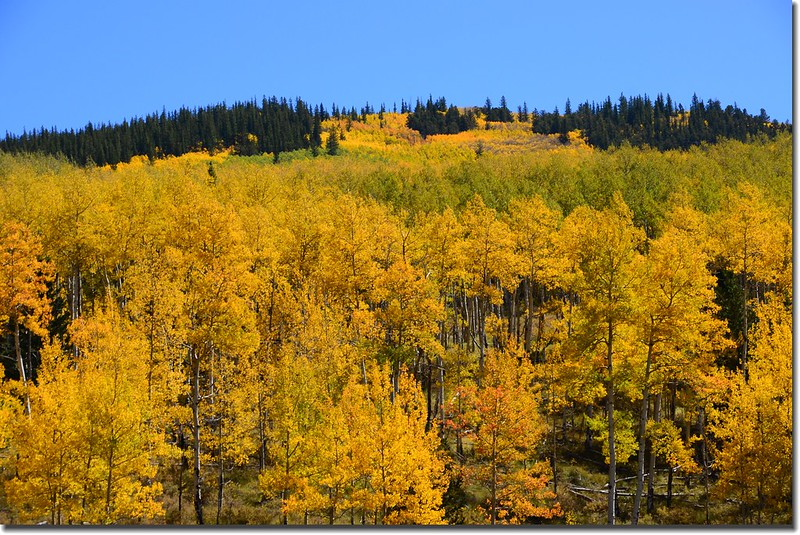 Fall colors, Kenosha Pass  (13)