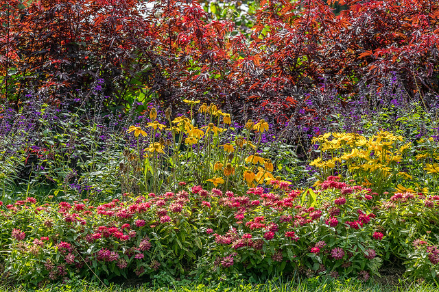 An Explosion of Color - Rutgers Gardens