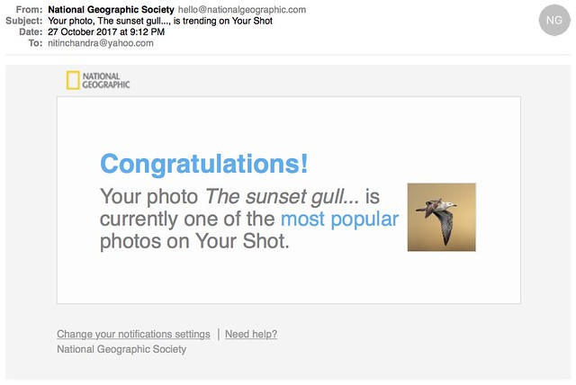 Your photo The sunset gull is trending on Your Shot
