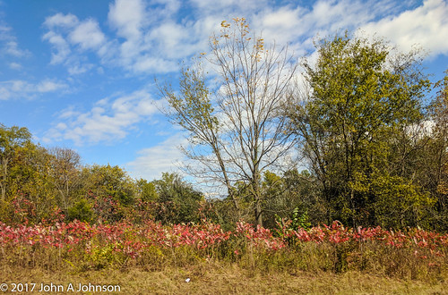 2017-10-24 Sumac by the interstate