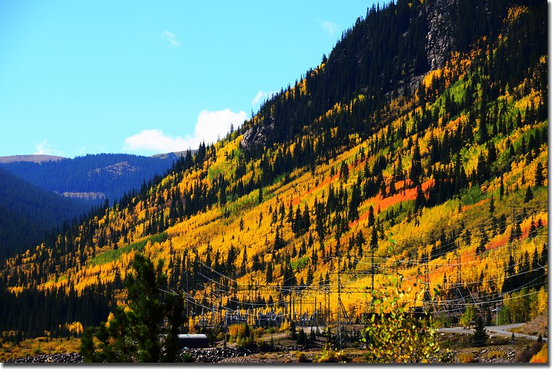 Fall colors, Guanella Pass, Colorado (4)