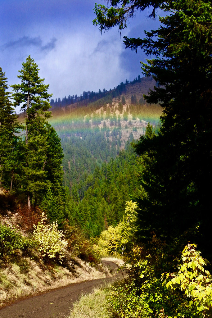 Weeksville Creek Rainbow