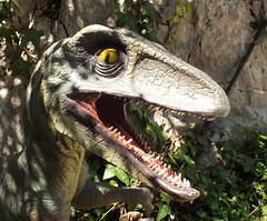 Raptor (†Velociraptor osmolskae)