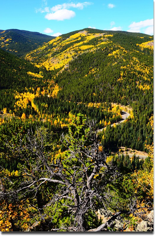 Fall colors, Mount Evans Scenic Byway, Colorado (32)