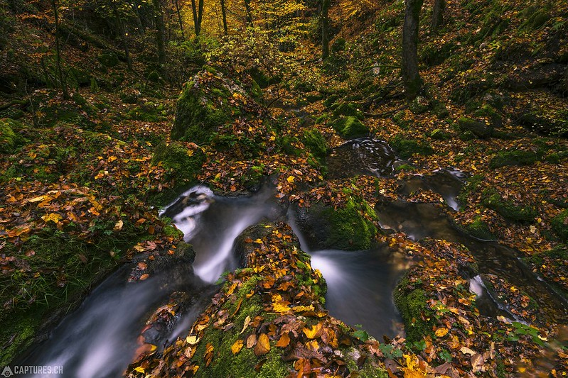 In the colored forest - Twannbachschlucht