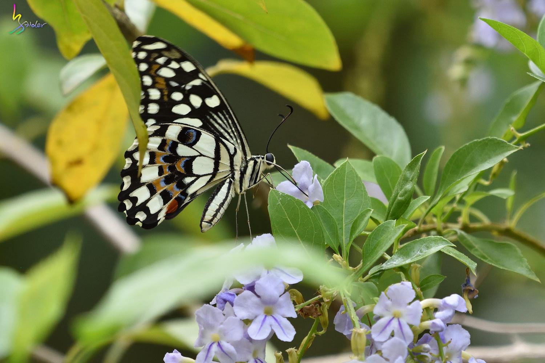 Butterfly_2510