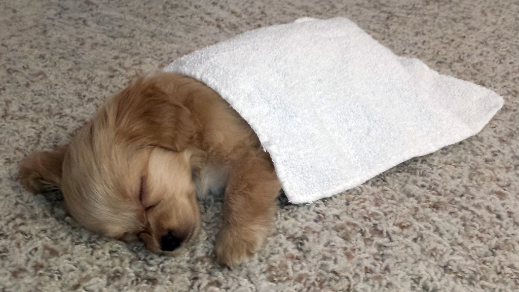 Toasty still doesn't use his bed