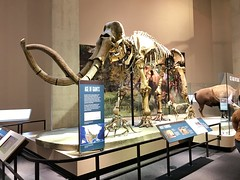 Wooly mammoth at Perot Museum